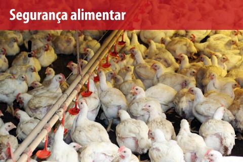 Uso de antibiótico em animais de abate é proibido