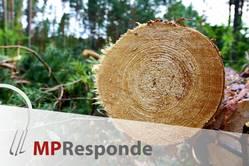 MP Responde